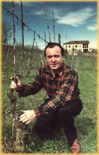 madeira vin 1930